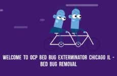 Professional Bed Bug Exterminator in Chicago