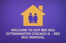 Bed Bug Removal Service In Chicago | 773-985-5136