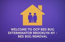 Brooklyn Bed Bug Exterminator | 347-652-1551
