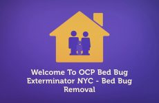 OCP : Professional Bed Bug Exterminator in NYC