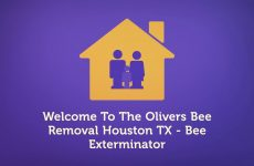The Olivers Bee Removal In Houston TX | 346-201-4360